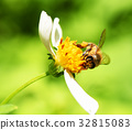 Bee on flower green background 32815083