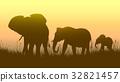 野生 动物 太阳 32821457
