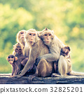 monkey family - retro vintage filter effect 32825201
