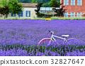 자전거,라벤더,하늬가벤더팜,고성,강원도,한국 32827647