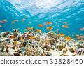 鹹水魚 海水魚 海魚 32828460