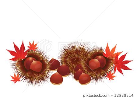 chestnut, chestnuts, japanese chestnut 32828514