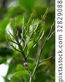 상록, 식물, 작다 32829088