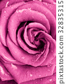 เบ่งบาน,บานสะพรั่ง,ดอกไม้ 32835315