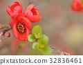 노망 꽃 32836461