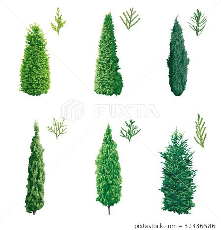 插圖素材: 針葉樹 針葉 植物