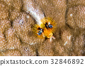 yellow and black christmas tree worm 32846892