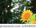 꽃, 여름, 해바라기 32848600