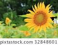 꽃잎, 꽃, 여름 32848601