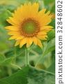 꽃, 꽃잎, 여름 32848602