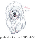 vector white cute dog Bichon Frise breed 32850422