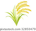 paddy, rice plant, ear of rice 32850479