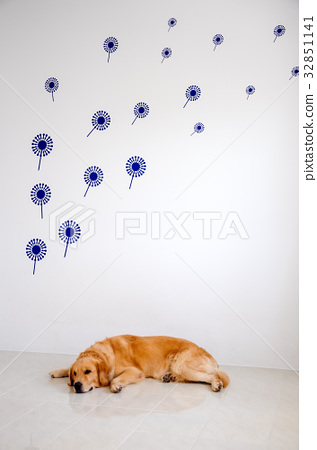 golden retriever laying in room 32851141