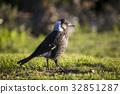 Bird Portrait 32851287