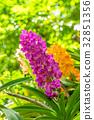 bloom blossom branch 32851356