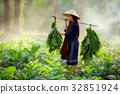 烟草 树叶 丰收 32851924