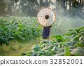 烟草 树叶 农业 32852001
