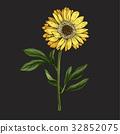 flower, stem, vector 32852075