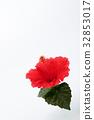hibiscus, bloom, blossom 32853017