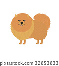 Pomeranian spitz. Cute red baby dog. 32853833