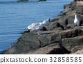 bird, birds, fowls 32858585
