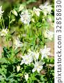botanic, botanical, bloom 32858630