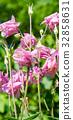 botanic, botanical, bloom 32858631