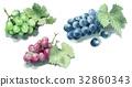 葡萄 水彩畫 水果 32860343