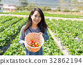 Young Woman picking strawberry in field 32862194