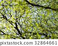 tree branch in the spring season. 32864661