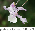 Close up of Pink orchid flower. 32865526