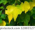 Yellow leaf on tree. 32865527