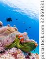 Clownfish living in sea anemone Okinawa Prefecture · Kerama Islands · Zamami sea 32869331