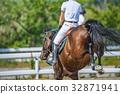 horse back riding, equine, horse 32871941