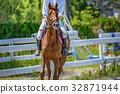 ขี่ม้า,ม้า,งานอดิเรก 32871944