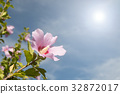 Pink flower in spring on a sunny day 32872017