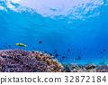 生活在珊瑚礁沖繩縣,慶良間群島,座間味海的魚類 32872184