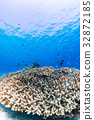 珊瑚 蓝绿色小热带鱼 海洋 32872185