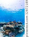 生活在珊瑚礁沖繩縣,慶良間群島,座間味海的魚類 32872189
