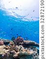 生活在珊瑚礁沖繩縣,慶良間群島,座間味海的魚類 32872190