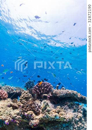 珊瑚礁 魚 海 32872190