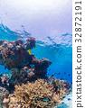 生活在珊瑚礁沖繩縣,慶良間群島,座間味海的魚類 32872191