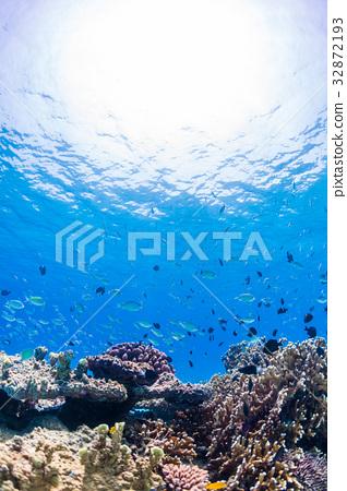 生活在珊瑚礁沖繩縣,慶良間群島,座間味海的魚類 32872193