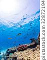 生活在珊瑚礁沖繩縣,慶良間群島,座間味海的魚類 32872194