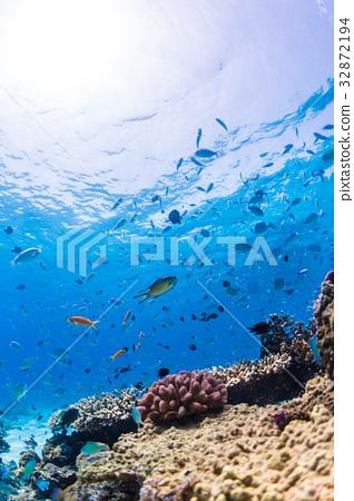 珊瑚礁 魚 海 32872194