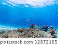 珊瑚 鱼 海洋 32872195