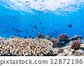 生活在珊瑚礁沖繩縣,慶良間群島,座間味海的魚類 32872196