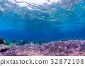 보라색 산호초 오키나와 게 라마 제도 · 자 마미의 바다 32872198