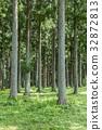 日本柳杉 日本柳杉灌木叢 松林 32872813