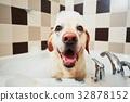 Dog taking a bath 32878152